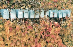Mailboxes in ivy | by zieak