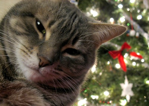 lucy, the christmas cat | by saramarie