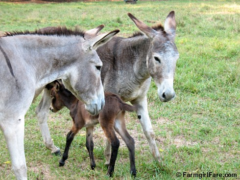 The Daily Donkey 92 | by Farmgirl Susan