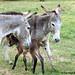 The Daily Donkey 92