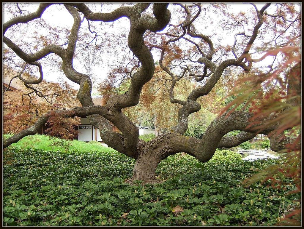 Twist in a japanese garden japanese garden philadelphia for Jardin zen japonais