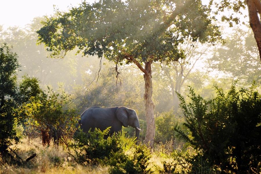 safari14pieni