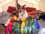 Levi at Collie Nationals | by Cynthia Blue