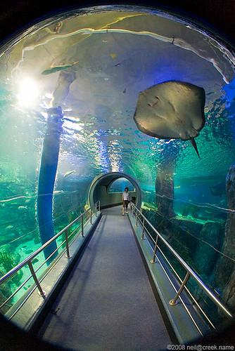 Melbourne Aquarium Tour Neil Creek Flickr