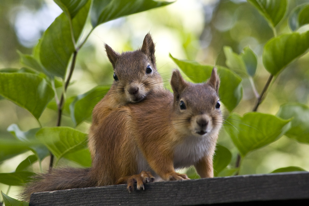 Squirrel Hug Squirrels And Quot Love In The Air Quot Check Out