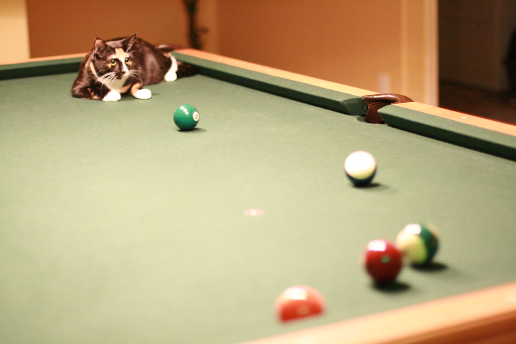 Puddy on the pool table puddy vs billiards huilin dai flickr - Billiard table vs pool table ...