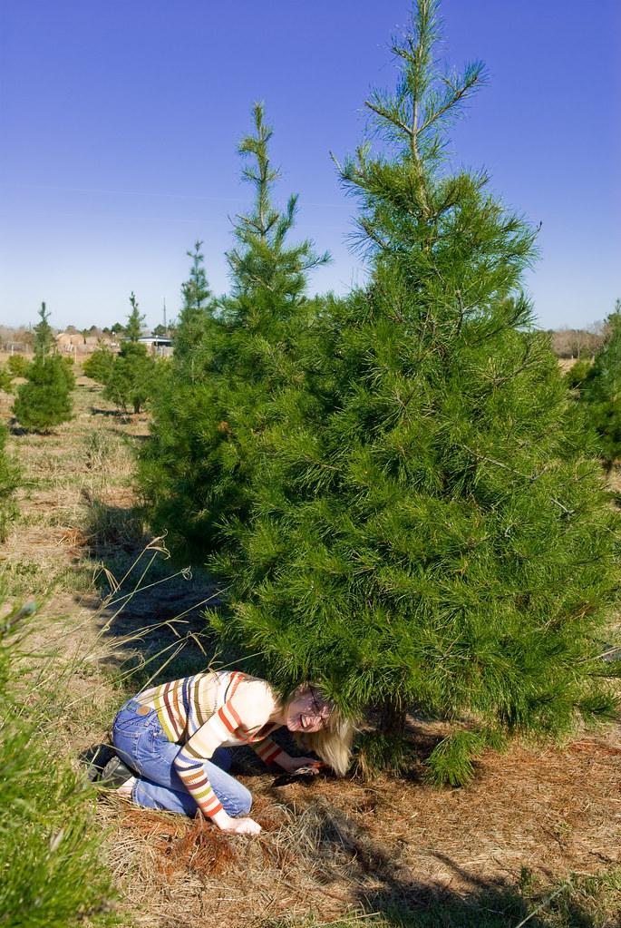 Christmas Tree Lot Jobs