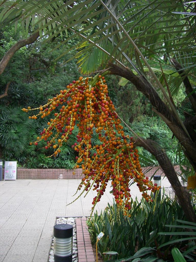 Hong Kong Zoological And Botanical Gardens Jinjian Liang Flickr