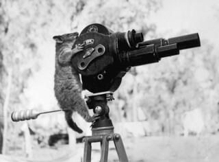 A possum and a movie camera 1943 | by Australian War Memorial collection