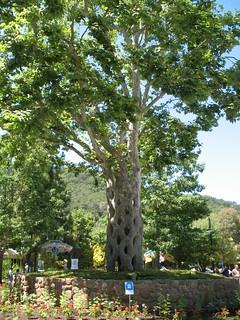 Gilroy gardens circus tree ray bouknight flickr for Gilroy garden trees