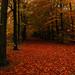 autumn forest carpet
