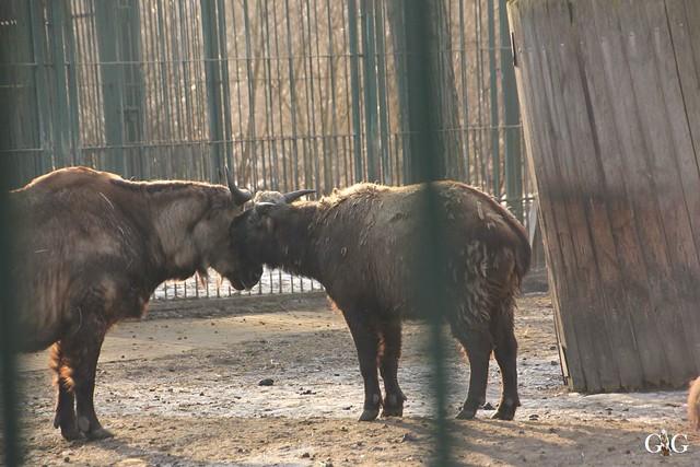 Tierpark Friedrichsfelde 29.01.201752