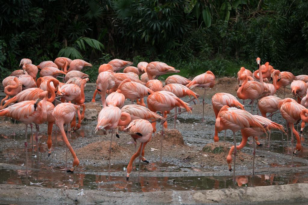 Jurong Birds Park Visit pictures
