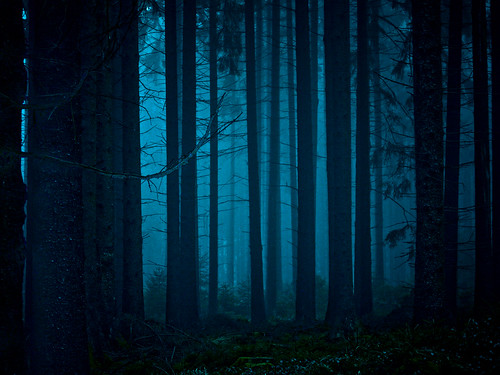 mystischer Wald - mystical forest | enabled for desktop ...