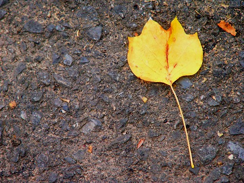 A solitary leaf | by Kathleen Tyler Conklin