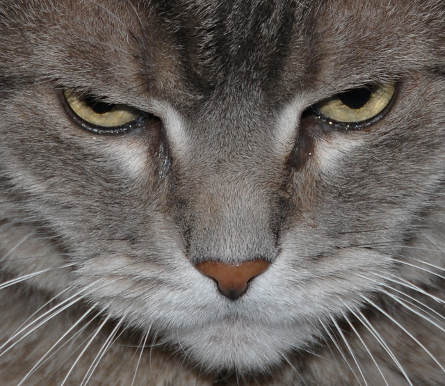 Unhappy Cat | cbragg | Flickr