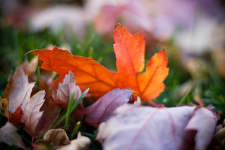 More fall leaves... | by life is good (pete)