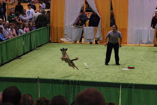 Kc home garden show disc dogs Home and garden show kansas city