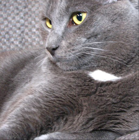 Gray Cat Videos