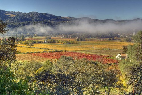 Early morning in the Napa valley | by ah zut