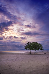 06 beach Borneo | by Agron