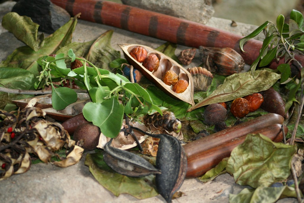 Australia traditional aboriginal food your basic forest for Australian modern cuisine
