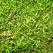 Moss / 苔(こけ)