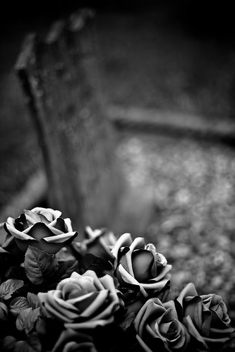 Roses | by rymus