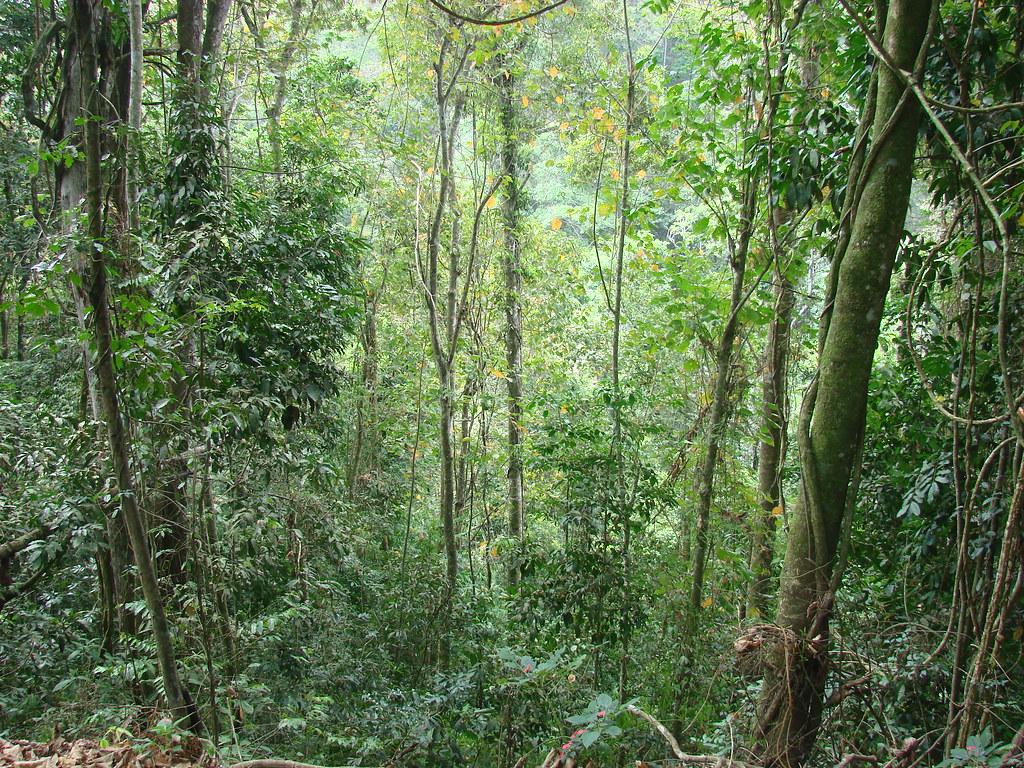 En el bosque 2 - 4 10