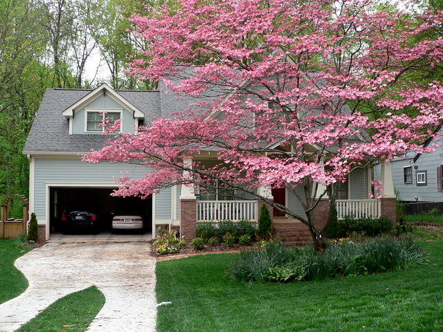 Image Result For House Garden Tree