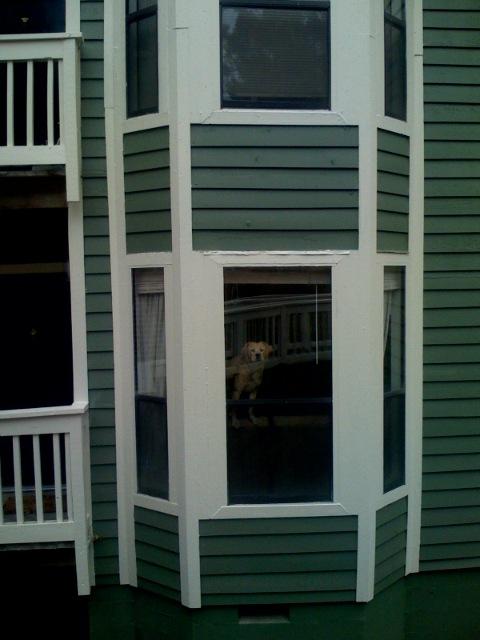 Neighbors Dog Barking All Day Outside