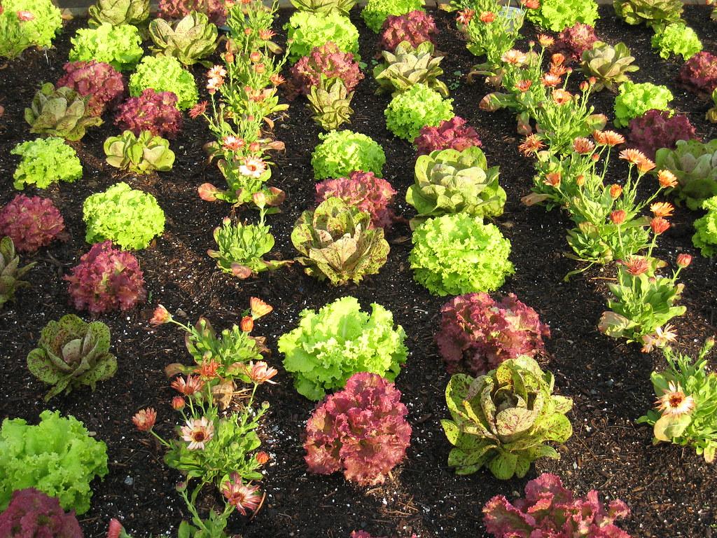 lettuce entertain you chicago botanic garden style flickr