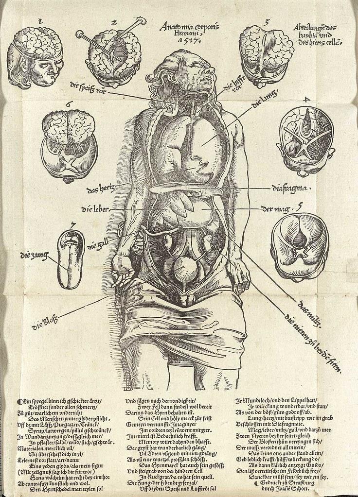 Bonito Ans En La Anatomía Galería - Imágenes de Anatomía Humana ...