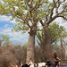 Ifaty Spiny Forest, Madagascar