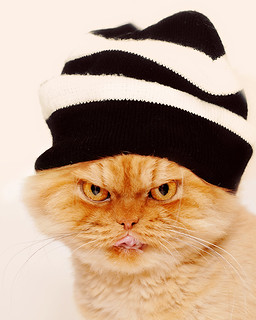 Garfi-Persian cat with hat | by E.L.A