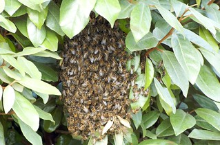 Bee Swarm again | by Harlequeen