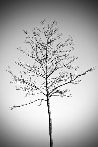 Lonely Tree | by brandnewday10