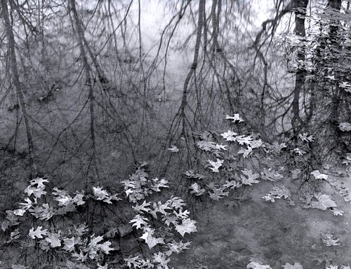 Leaves in Stream | by Thomas Hardy