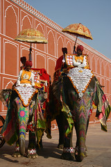 Elephants at the City Palace in Jaipur, Rajasthan, India (November 2007) | by Cor Lems