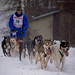 Sled Dogs #10
