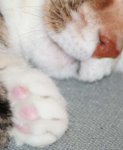 Pink Paw Pads | by Sharon's Shotz