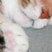 Pink Paw Pads