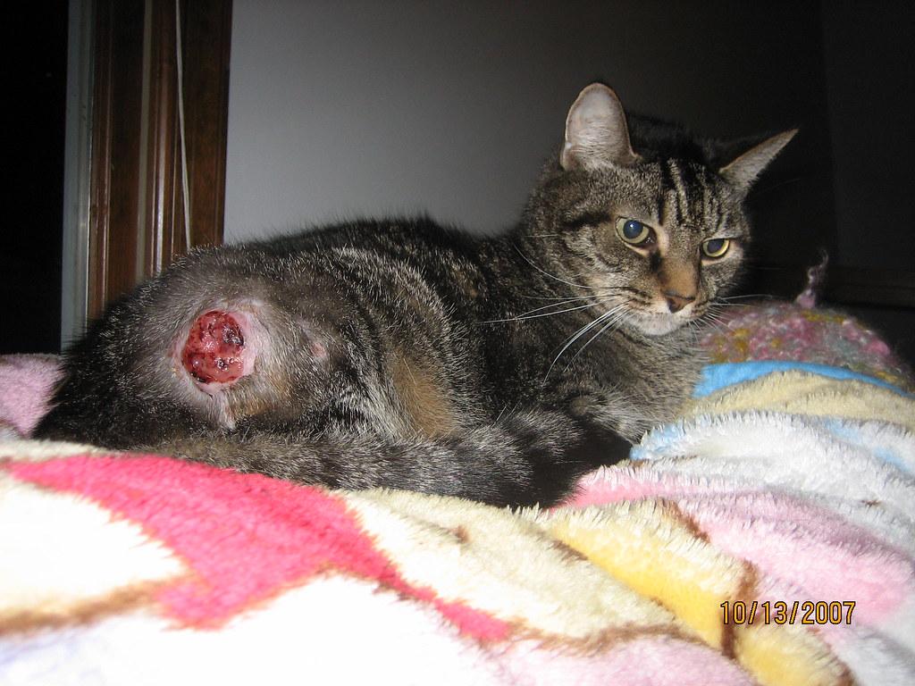 Can An Indoor Cat Get Rabies