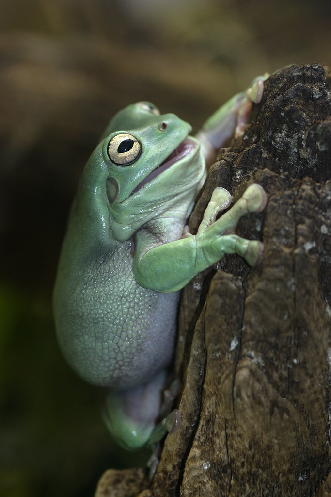 why frogs jump Jump, frog, jump has 859 ratings and 101 reviews ronyell said: jump, frog, jump is a lyrical teacher should ask students why the frog keeps jumping away science- good for the standard.