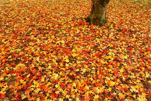 autumn color | by nobuflickr