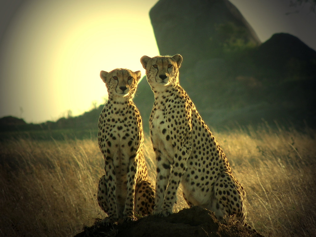 Which Two Big Cats Is Serengeti National Park Famous For