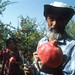 Man in Pomegranate Farm.  Tajikistan.