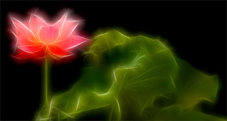 Fractalius Red Lotus Flower with green leaf / green / red / nature /  on black background - IMGP8189 - , ハスの花, 莲花, گل لوتوس, Fleur de Lotus, Lotosblume, कुंद, 연꽃, | by Bahman Farzad