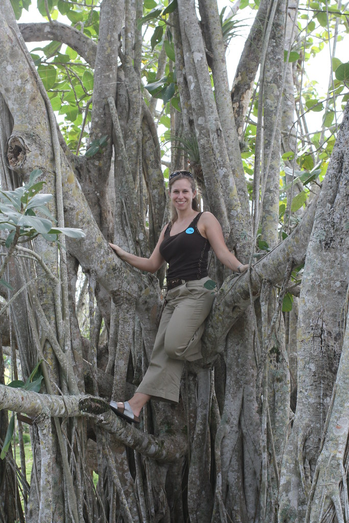 Banyan tree at Fairchild Tropical Botanic Garden  We ...