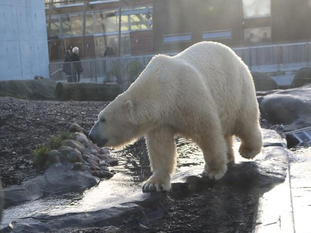 zoo copenhaga 2 obiective turistice copenhaga